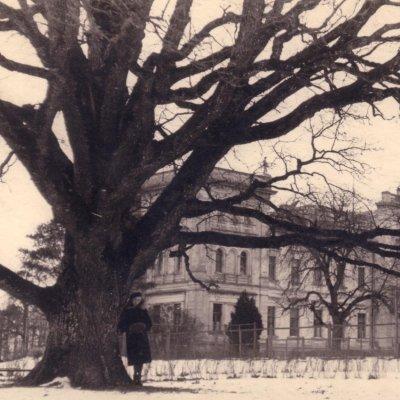 The Thunder oak