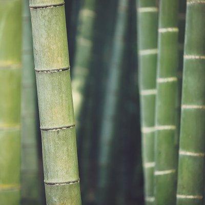 Bambukų slėnis